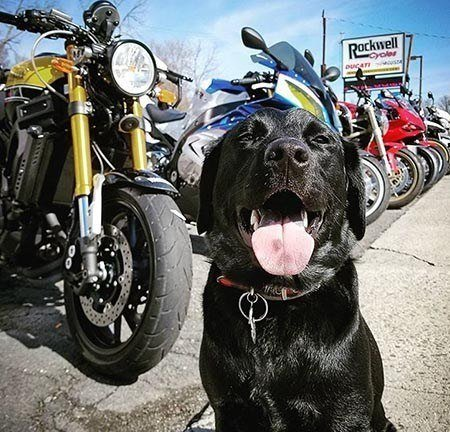 Archer the Shop Dog at Rockwell Cycles in Fort Montgomery, NY